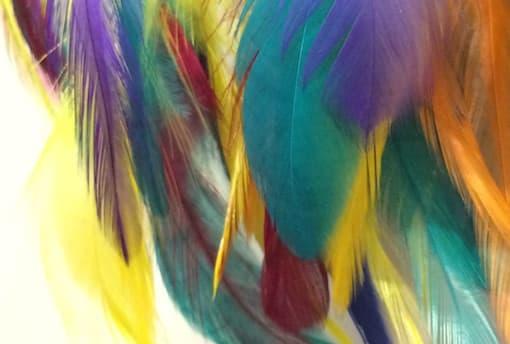 Als een adelaar in een parkietenkooi